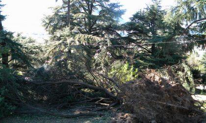 Allerta per vento forte domani in provincia