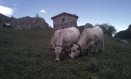 Truffa degli Alpeggi: trenta indagati