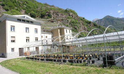 Incontro formazione sulla viticoltura biologica
