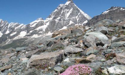 In mostra fiori e paesaggi delle Alpi