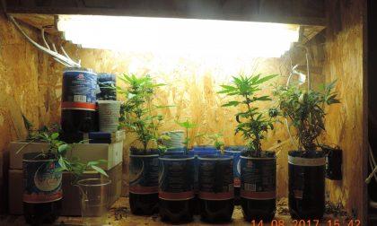 Dubino, coppia in manette per la marijuana