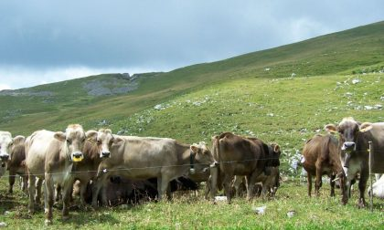 L'informatica anche per muovere il bestiame