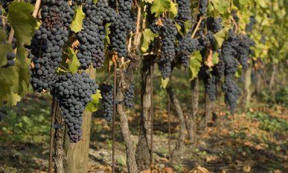 Morbegno, incontro per viticoltori