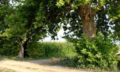 Al via il censimento degli alberi secolari