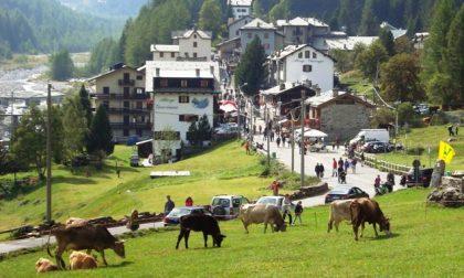 Torna la Festa dell'Alpeggio – Il PROGRAMMA