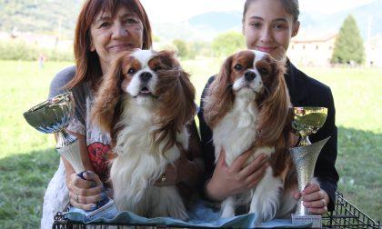 Il cane più bello d'Italia vive a Lanzada