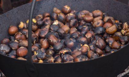 Giornata del castagneto nei boschi di Stova dell'Orlo