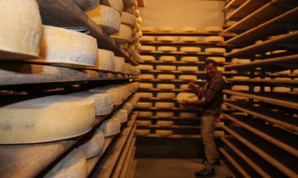 Mostra del Bitto: grande attesa per i migliori formaggi