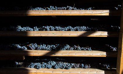 Vininfesta alla Costiera dei Cech: confermato il concorso dei vini