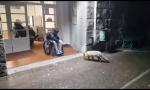 Una volpe per amica VIDEO