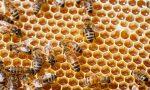 E' allarme anche per api e miele: le gelate hanno colpito gli alberi di acacia