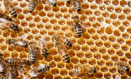 Sondrio, corso per diventare apicoltori
