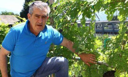 Viticoltura: si annuncia positiva l'annata 2018 in Valtellina