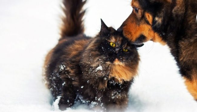 Come Proteggere Gli Animali Dal Freddo Giornale Di Sondrio