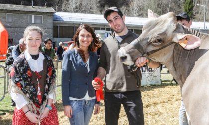 Prima di Pasqua la Mostra Zootecnica della Valmalenco