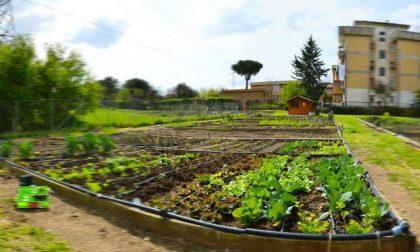 Lockdown, per i cittadini è salva  la possibilità di curare orti e terrazzamenti