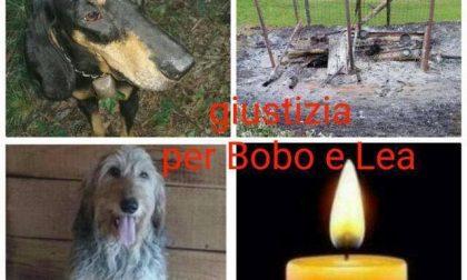 """Cani bruciati vivi, """"le punizioni della legge sono inadeguate"""""""