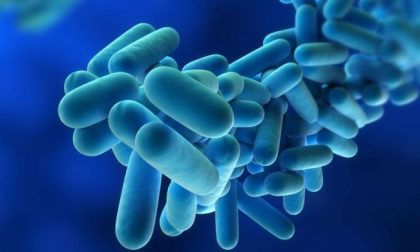 Salgono i casi di Legionella in Lombardia