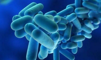 Legionella e polmonite a Brescia: morte sospetta di un neonato