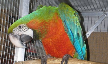 """""""Quel pappagallo parlante mi dà della... zoccola"""""""