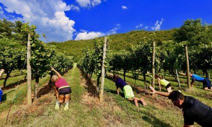 Zappare e raccogliere, l'attività in vigna diventa ginnastica wellness
