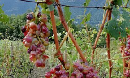 Il maltempo non lascia la provincia  di Sondrio, l'agricoltura è in allerta