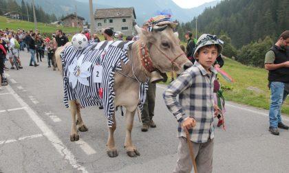 Grande successo per la Festa dell'Alpeggio