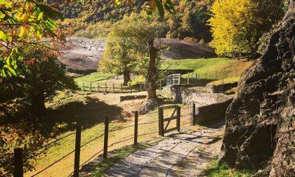 Grosio, autunno al Parco delle incisioni rupestri
