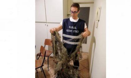 Bracconieri in azione: beccata una rete abusiva con  oltre 70 pesci morti FOTO