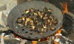 Castagne, l'annata in Valle è buona per qualità e quantità