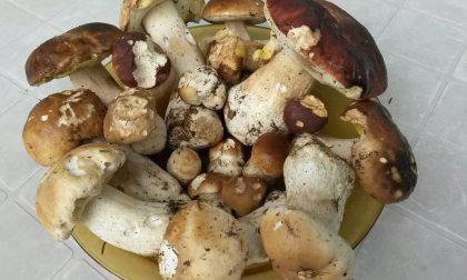 Ottanta esperti da tutta Italia impegnati nello studio delle specie di funghi d'alta quota