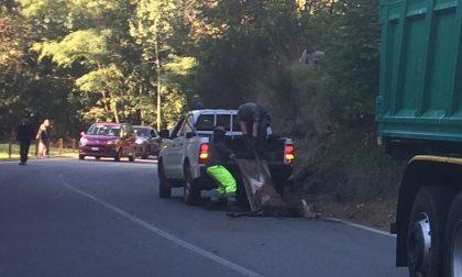 Cervo contro camion Secam, autista illeso