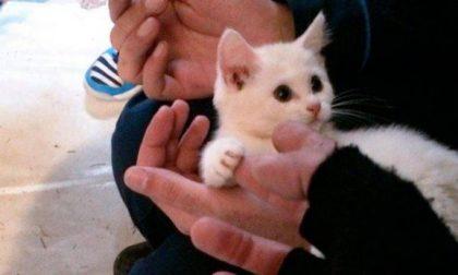 Killer di gatti: a Lecco è iniziato il processo