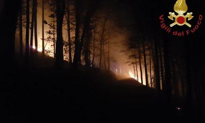 Incendio a Stazzona il bosco va in fiamme FOTO