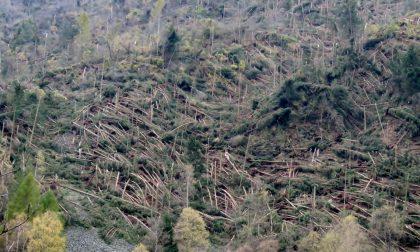 Strage di alberi in Valtellina FOTO