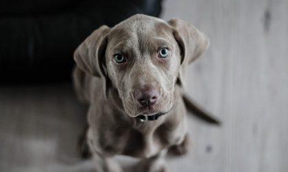 Cani maltrattati: trovate tre carcasse, il sopravvissuto rinchiuso nel degrado
