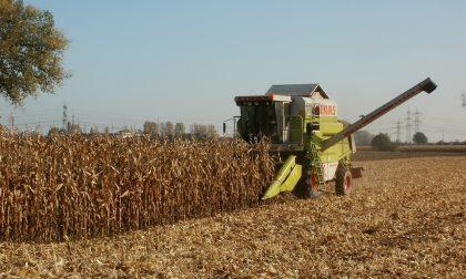 Agricoltura, al via il nuovo censimento