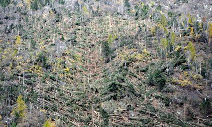 Un anno è passato dalla strage di alberi FOTO
