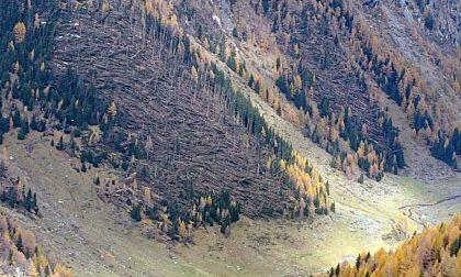 Strage di alberi a fine ottobre, partono i lavori di bonifica FOTO
