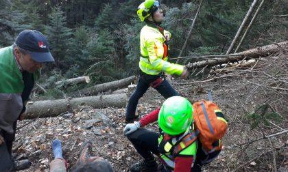 Cosio Valtellino: boscaiolo colpito da un tronco