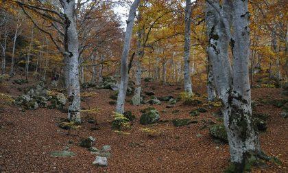 Misure forestali, arrivano i fondi alle Comunità montane