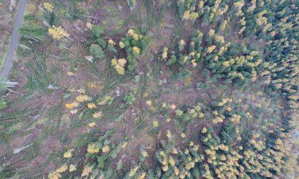 Cm, lavori sugli alberi abbattuti