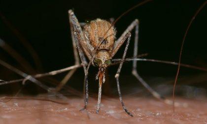 Sondrio: la lotta alle zanzare parte in anticipo
