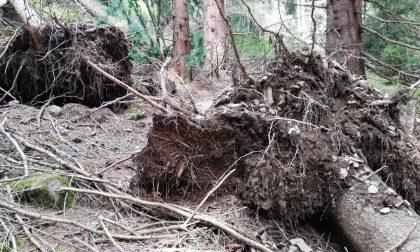 Tempesta Vaia, ecco come sono i nostri boschi