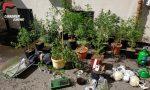 Coltivazione di marijuana in casa, famiglia arrestata