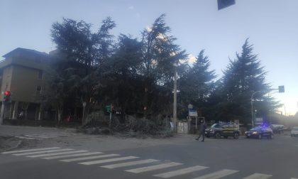 Le raffiche di vento spezzano rami e danneggiano il semaforo