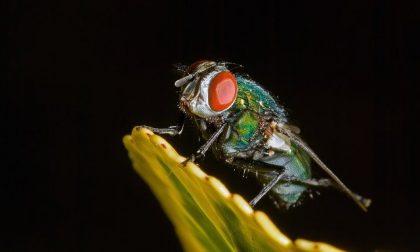 Insetti trasmettono il coronavirus, acqua e bicarbonato per curarlo: tutte le ultime fakenews