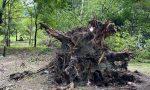 Vento forte, sradicato un grosso albero al parco Bartesaghi – FOTO