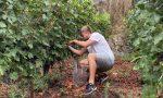 Viticoltura, si annuncia una vendemmia precoce in Valtellina