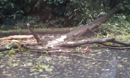 Nubifragio in valtellina: piogge e forti venti, soccorsi in azione per aliante in difficoltà VIDEO